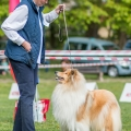 kolia-dlhosrsta-collie-rough-club-show-lucenec-2016 38.jpg