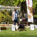 kolia-dlhosrsta-collie-rough-club-show-lucenec-2016 8.jpg