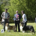 club-show-chropyne-2016-collie-rough-kolia-dlhosrsta 1.jpg