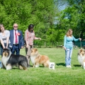 club-show-chropyne-2016-collie-rough-kolia-dlhosrsta 2.jpg