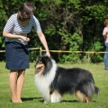 club-show-chropyne-2016-collie-rough-kolia-dlhosrsta 3.jpg