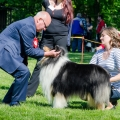 club-show-chropyne-2016-collie-rough-kolia-dlhosrsta 6.jpg