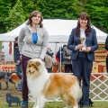 kolia-dlhosrsta-collie-rough-asan-club-winner 1.jpg