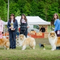 kolia-dlhosrsta-collie-rough-asan-club-winner 2.jpg