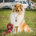 kolia-dlhosrsta-collie-rough-asan-club-winner 9.jpg