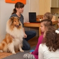 kolia-dlhosrsta-canisterapia-v-skole-collie-rough-canistherapy-in-school 2.jpg