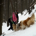 kolia-dlhosrsta-turistika-tura-na-klak-collie-rough-winter 10.jpg