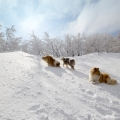kolia-dlhosrsta-turistika-tura-na-klak-collie-rough-winter 20.jpg