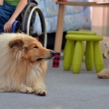 kolia-dlhosrsta-deti-canisterapia-children-canistherapy-collie-rough 10.jpg