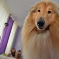 kolia-dlhosrsta-deti-canisterapia-children-canistherapy-collie-rough 3.jpg