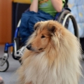 kolia-dlhosrsta-deti-canisterapia-children-canistherapy-collie-rough 9.jpg