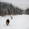 kolia-dlhosrsta-zima-collie-rough-winter 1.jpg