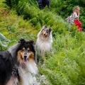 kolia-dlhosrsta-tatry-collie-rough-in-nature 33.jpg