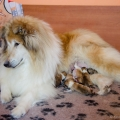 d-vrh-kolia-dlhosrsta-steniatka-collie-rough-puppies 4.jpg